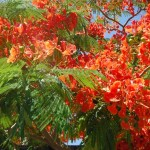 Brilliant tropical flowers