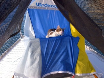 Cat on a Windscoop